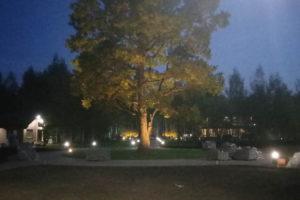 проектирование ландшафтного освещения